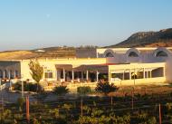 salle, degustation, vin, ceptune, usine, production, vente en ligne, tunisie